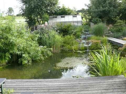 Teich for Fische naturteich
